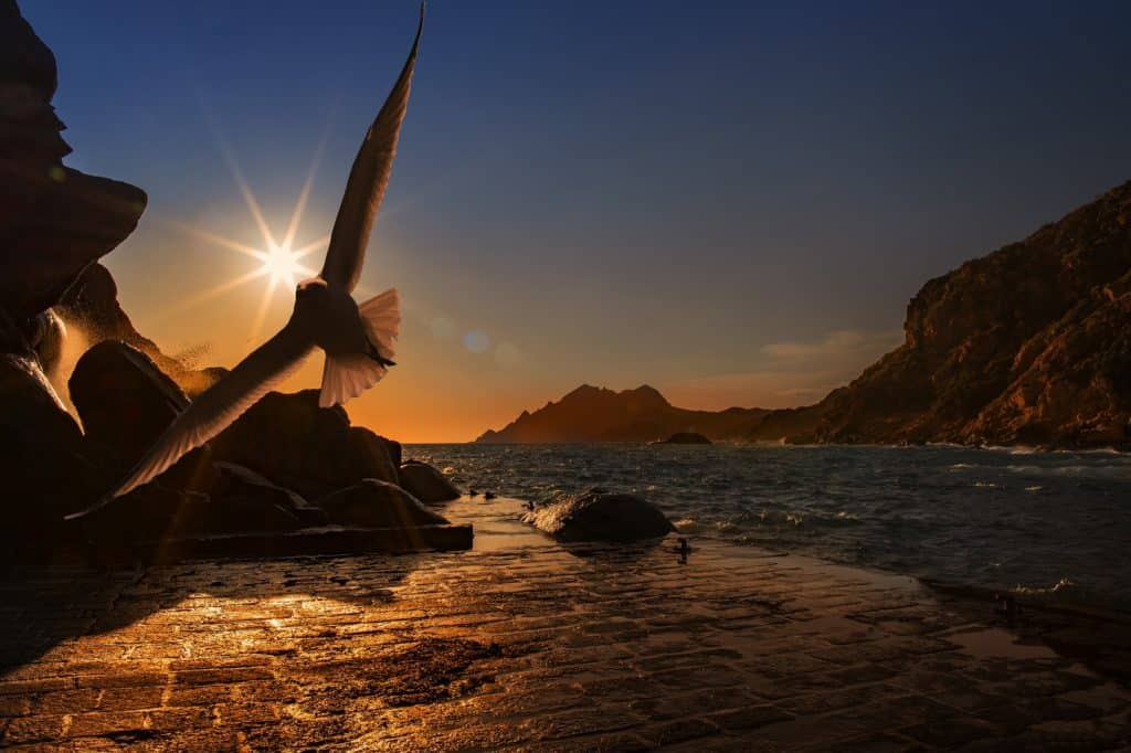 A photo of a dove flying peacefully near the water finding freedom in his self-love.