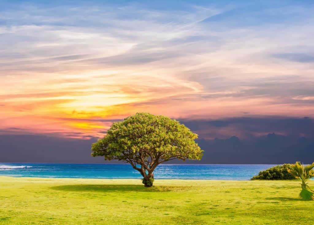 An Image of a tree with a picturesque sunset and water in the background.