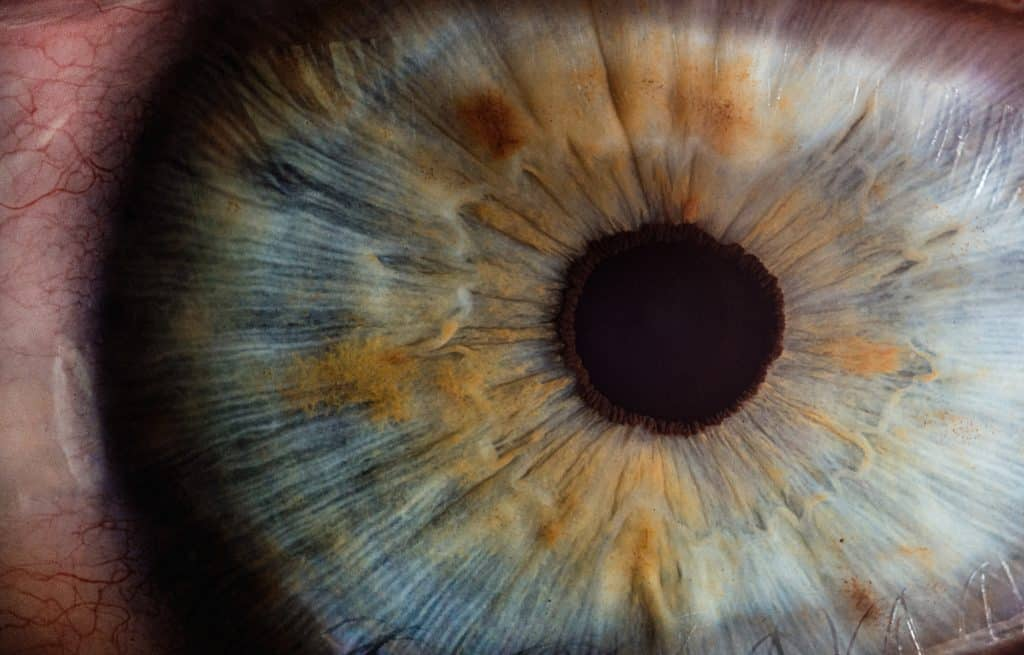 A photo of an iris from a human eye.
