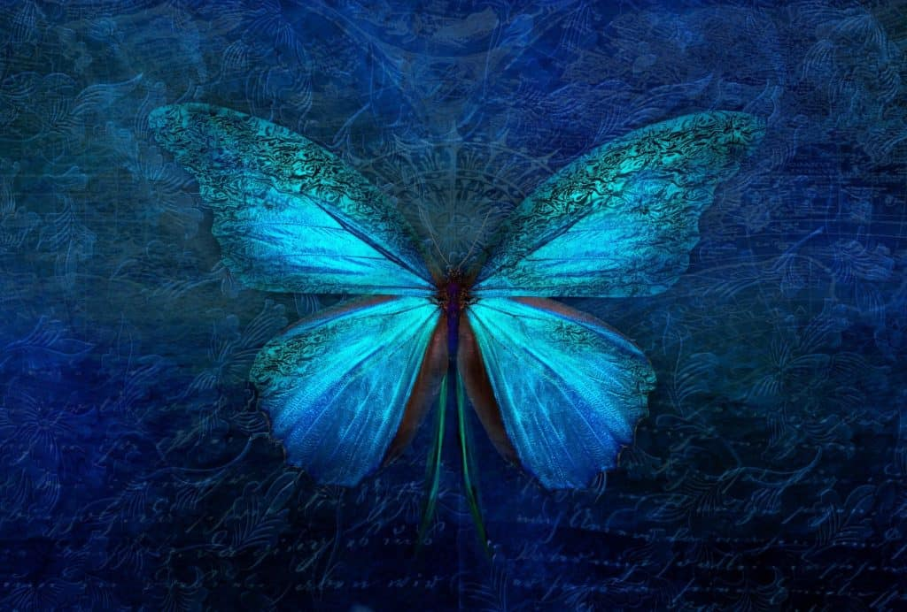 A photo of a blue morpho butterfly.