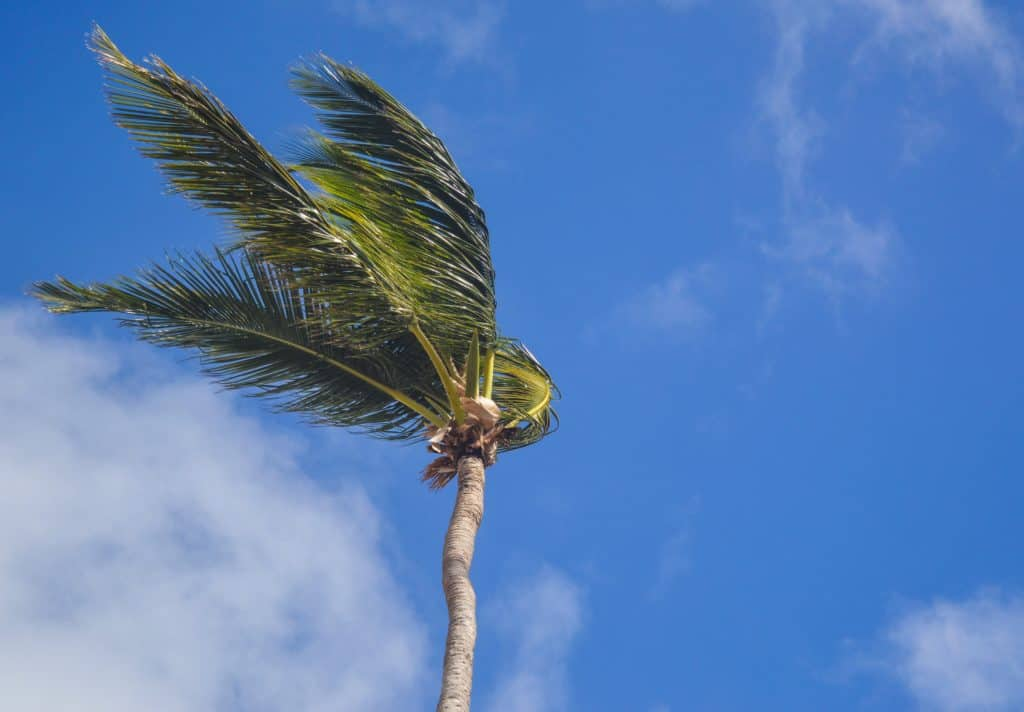 A photo of a tree with wind resistance