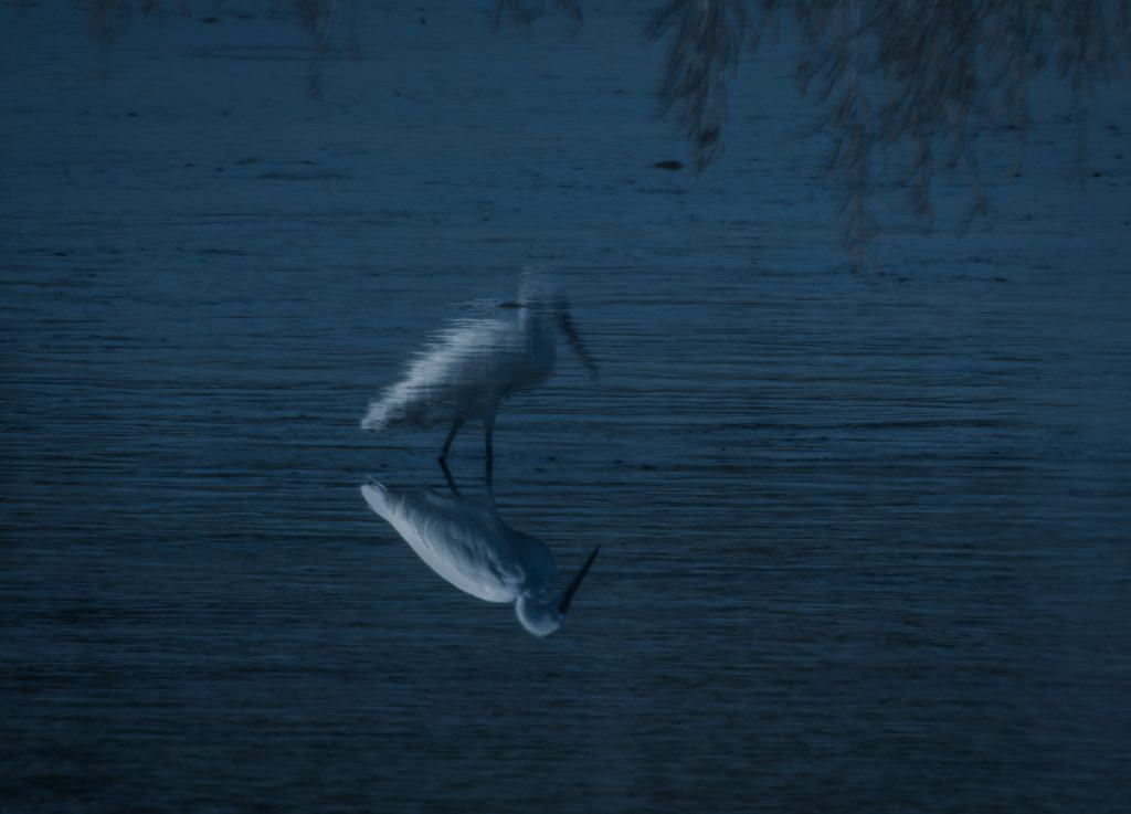 An image of a reflection of a heron.