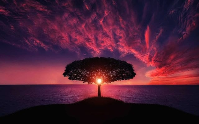 An image of a tree glowing from the sunset.