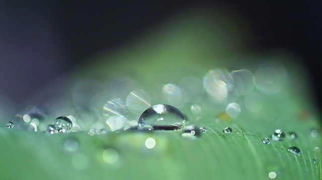 A zoomed in imaged of drops of water on a leaf.