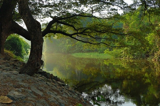 An image of a tree reflecting near a clear creek.