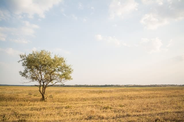 An image of a tree alone in the field.