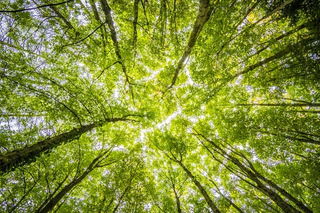 An image looking up from the ground if tree tops.  Photo by Felix Mittermeier from Pexels